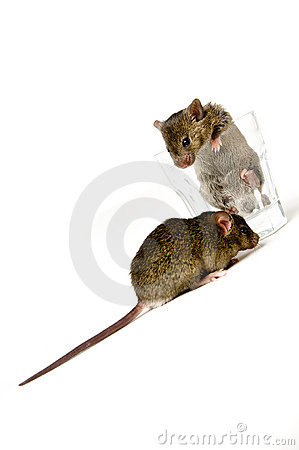 Mice and Glass
