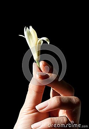 Michelia Alba and Hand