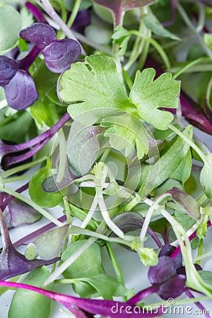 Free Micro Greens Close-up Stock Image - 67056261