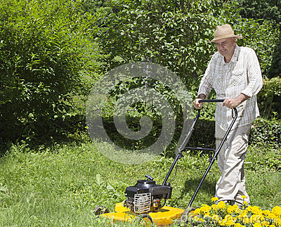 Mid age man is mowing the grass