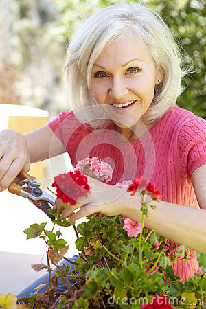 Free Mid Age Woman Pruning Geraniums Royalty Free Stock Photography - 55892147