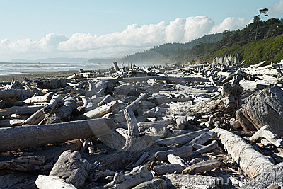 Midday Driftwood in Olympic National Park