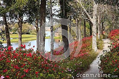 Middleton Plantation Charleston South Carolina SC