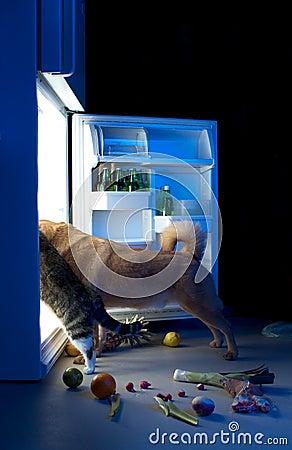 Free Midnight Snack Royalty Free Stock Photo - 2223675