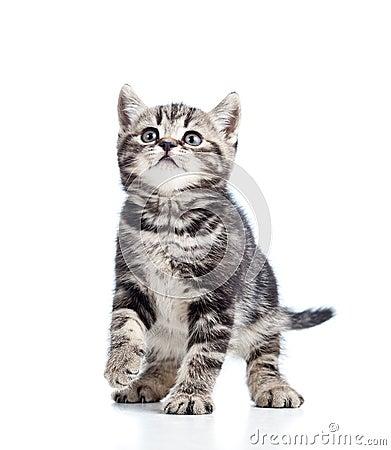 Miezekatze der schwarzen Katze auf weißem Hintergrund