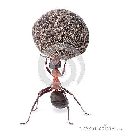 Ant holding heavy stone
