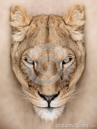 Free Mighty Lioness Royalty Free Stock Images - 100607209