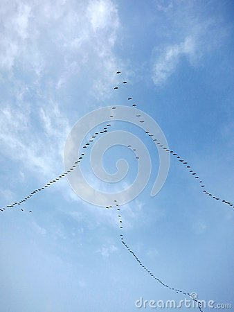 Free Migratory Birds Flying In Formation Royalty Free Stock Photo - 35826465