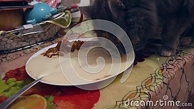 Mijn kat eet mijn voedsel stock footage