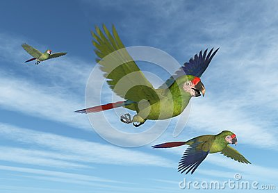 Military Macaws in Flight