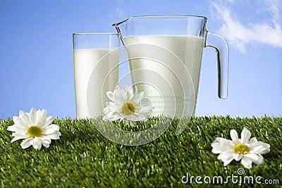 Milk on grass field