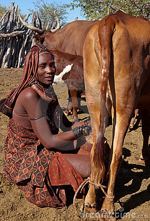 Milking in africa Editorial Image