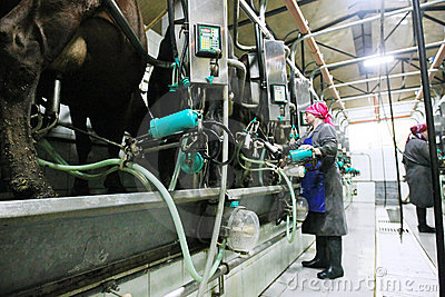 Milkmaid Editorial Photo