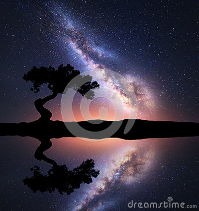 Free Milky Way With Alone Tree On The Hill Near The Lake Stock Photography - 91075662