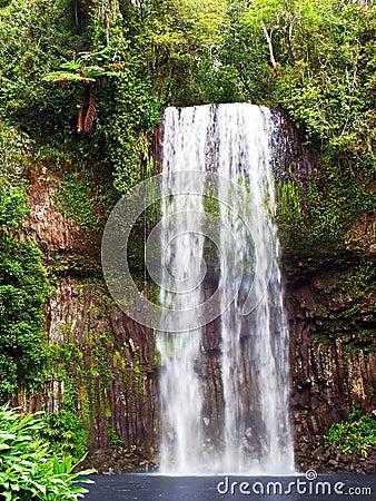 Free Millaa Millaa Falls Royalty Free Stock Images - 44719