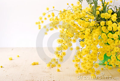 Mimosa for international women s day