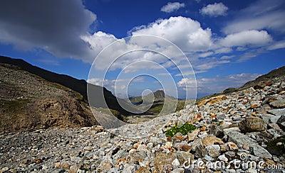 Mineral dry landscape