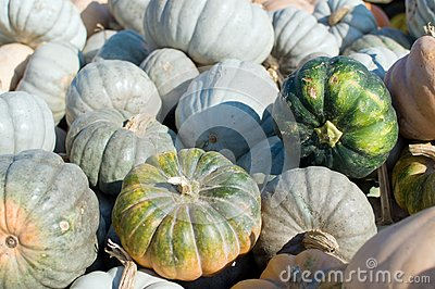 Mini Green Pumpkins