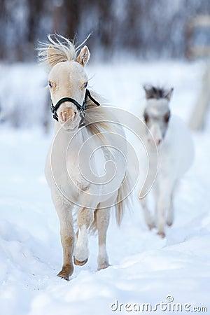 Mini horses