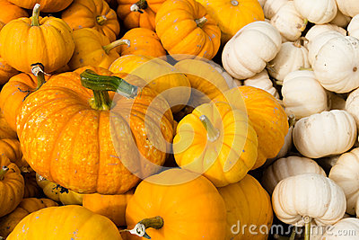 Mini Orange and White Pumpkins