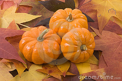 Mini-Pumpkins on Fall Leaves