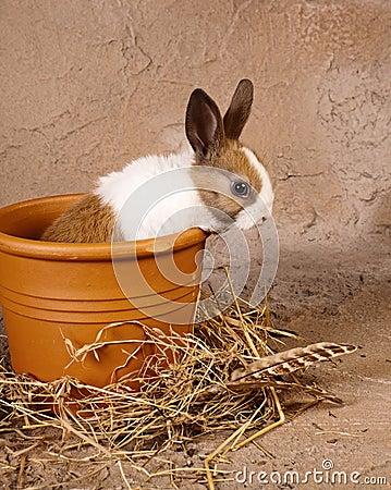 Mini rabbit in big flowerpot