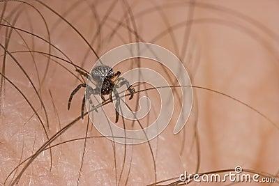 Mini spider on skin (2)