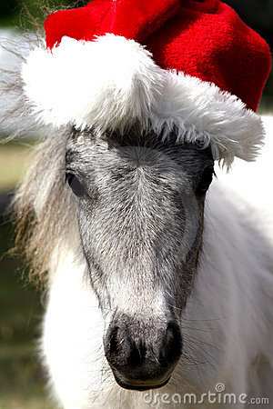 Free Miniature Christmas Horse Royalty Free Stock Photography - 17109277