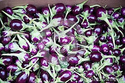 Miniature eggplants