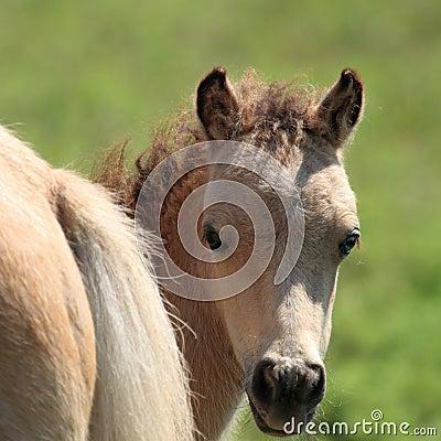 Miniature Horse Peek-a-Boo