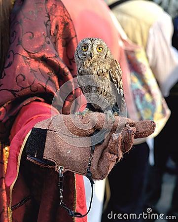 The Miniature Owl