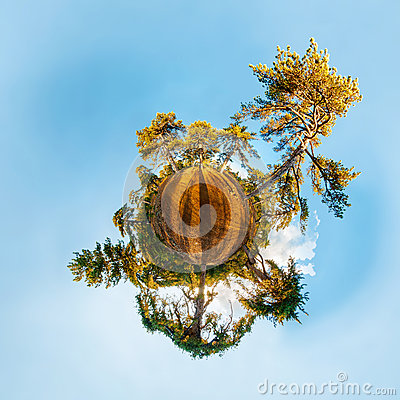 Miniature planet with pine forest