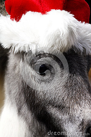 Miniature Stallion Horse with Christmas hat
