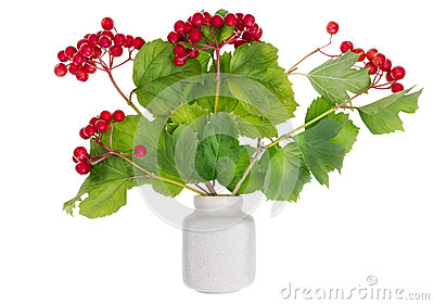 Minimalistic  bouquet-  viburnum berries