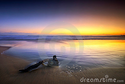 Minimalny seascape
