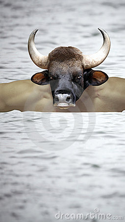 Minotaur crossing. Stock Photo