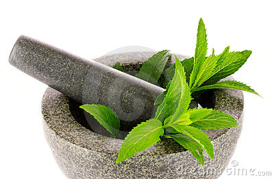 Mint in agray mortar