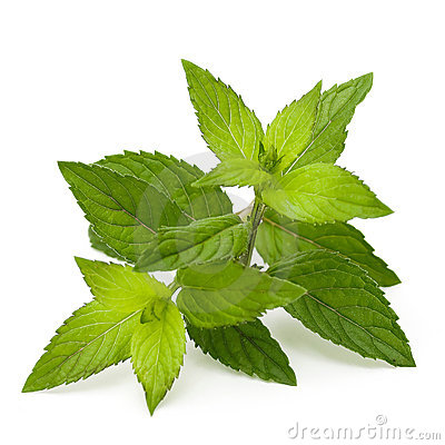 Free Mint Leaves Stock Photos - 10579883