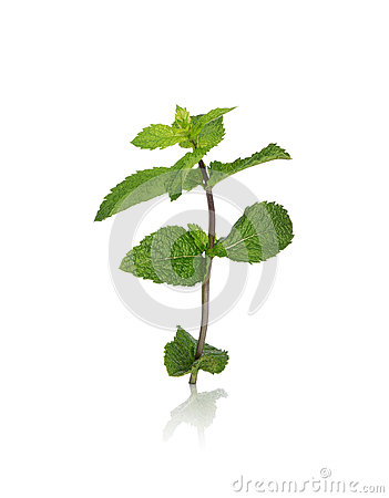 Mint sprig