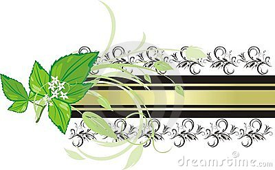 Mint sprig on the background of decorative banner