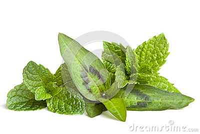 Mint Varieties Isolated