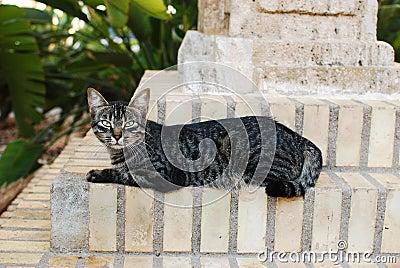 Mirada fija del callejón del gato