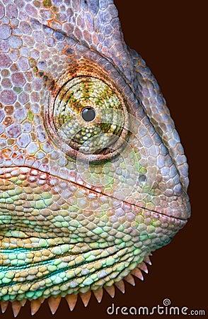 Mirada fija del camaleón