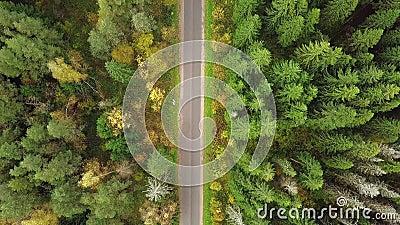Mirando abajo en el camino en el bosque de los colores impresionantes del otoño, esplendor de la caída, paso elevado aéreo Opinió almacen de video