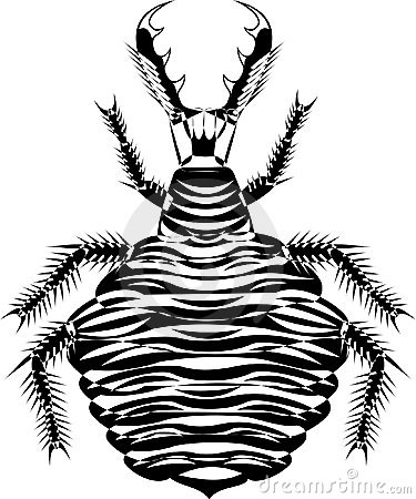 Mirmeleon larva