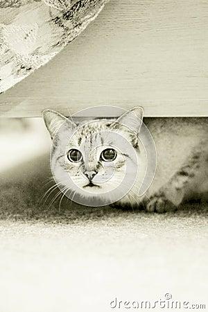 Mischief cat