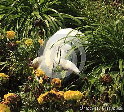 Mischievious bunny