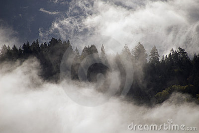 Mist above the forest