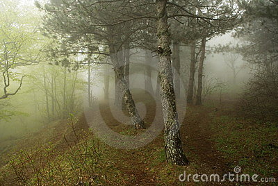 Mist in the forest