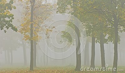 Mist and yellow tree foliage in autumn